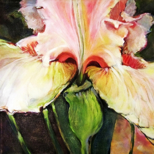 Iris  Oil Canvas 10 x 10 inch 2017